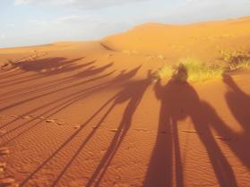 shadows of Camels in Merzouga, Morocco