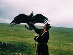 Eagle in Mongolia