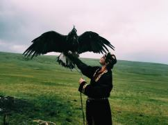 Eagle in Mongolia